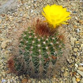 Cactus d 39 int rieur terre lointaine - Grand cactus d interieur ...