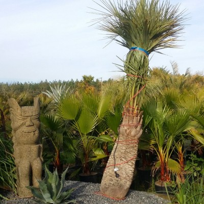 Protections pour plantes