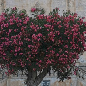 Arbustes et conifères