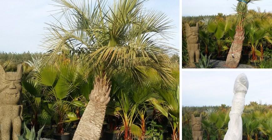 Bien protéger ses plantes pour l'hiver
