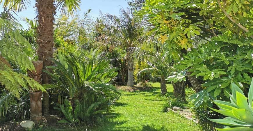 5 avantages à cultiver des plantes exotiques en France